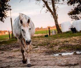 White horse on the farm Stock Photo