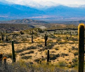 Wild cactus on large desert Stock Photo