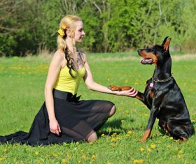 Woman training dog on the grass Stock Photo