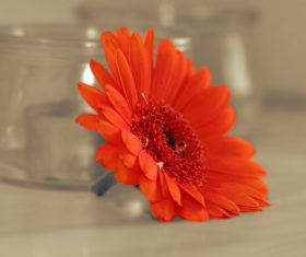 red flower near glass jars Stock Photo