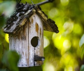 wooden bird nest Stock Photo