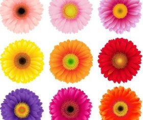 9 Kind chrysanthemum illustration vector