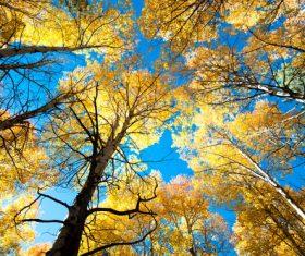 Amazing nature beautiful scenery Stock Photo 01