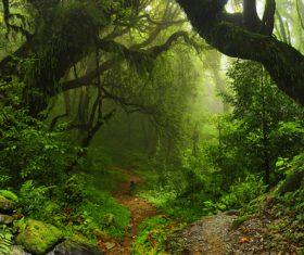 Amazing nature beautiful scenery Stock Photo 02