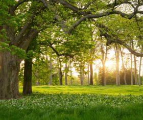 Amazing nature beautiful scenery Stock Photo 04