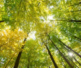 Amazing nature beautiful scenery Stock Photo 05