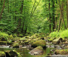 Amazing nature beautiful scenery Stock Photo 09