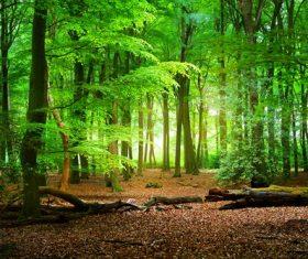 Amazing nature beautiful scenery Stock Photo 13