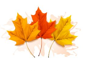 Autumn three colorful leaves vector