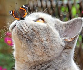 Cat looking at the butterfly falling on the mouth Stock Photo