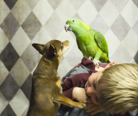Children and pets playing Stock Photo
