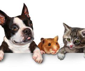 Cute pet Stock Photo