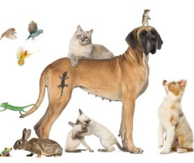 Different pets Stock Photo 03