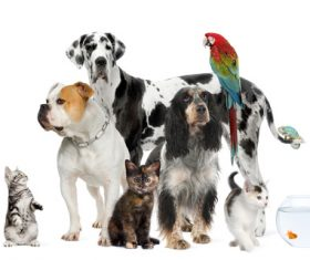 Different pets Stock Photo 04