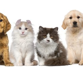 Different pets Stock Photo 06