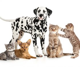 Different pets Stock Photo 07