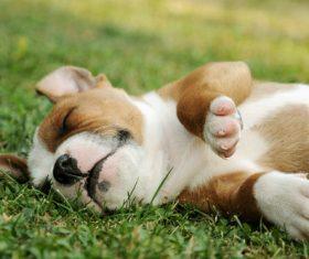 Dog lying on the grass sleeping Stock Photo