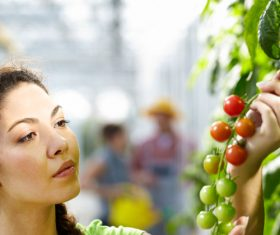 Farmers picking fruits and vegetables Stock Photo 01