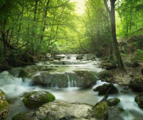 Flowing stream in the forest Stock Photo