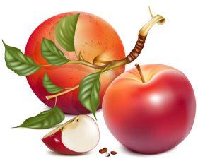 Fresh apples design vectors set 04
