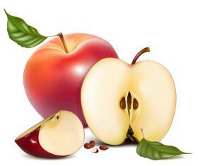 Fresh apples design vectors set 07
