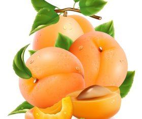 Fresh apricot design vectors set 01