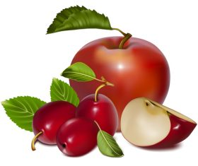 Fresh fruits design set vector 02