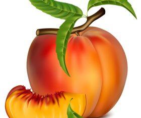 Fresh peach design vectors set 03