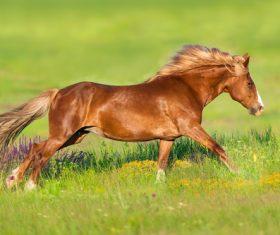 Horse running on the grass Stock Photo 02