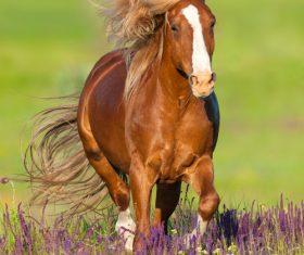 Horse running on the grass Stock Photo 03