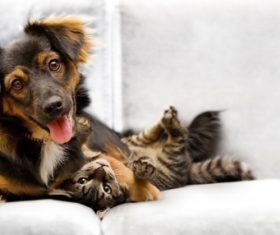 Kitten and dog on the couch Stock Photo