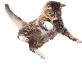 Kitten jumping up Stock Photo 01