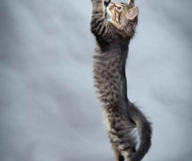Kitten jumping up Stock Photo 02