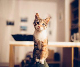 Kitten sitting in chair Stock Photo