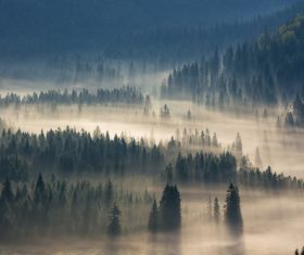 Large forest covered with fog Stock Photo