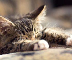 Little fluffy kitten sleeping Stock Photo 01