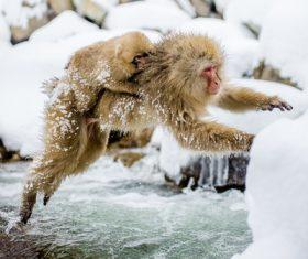 Monkey winter Enjoy hot spring Stock Photo 02