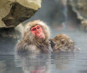 Monkey winter Enjoy hot spring Stock Photo 05