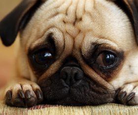 Puppy close-up Stock Photo