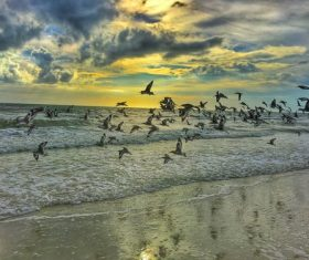 Seagulls flying on the beach Stock Photo