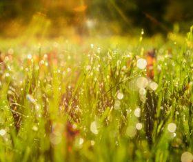 Stock Photo Dew on weeds