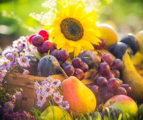 Stock Photo Fruits and flowers