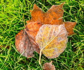 Stock Photo Green meadow and withered leaves