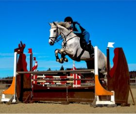 Stock Photo Horse racing across obstacles 01