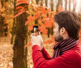Stock Photo Man photographing maple leaf with mobile phone