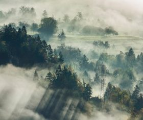 Stock Photo Photography of the woods in the dense fog on the hillside