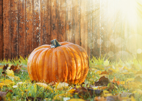 Stock Photo Pumpkin on the grass