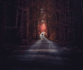 Stock Photo Small road scenery photography in the dusk woods
