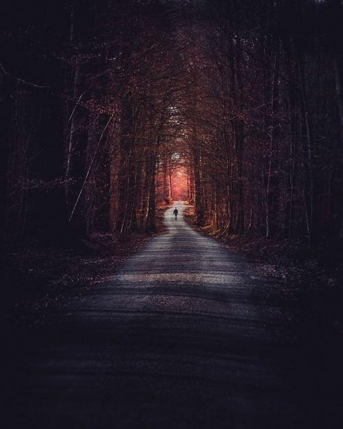 Forest At Dusk Wallpaper: Stock Photo Small Road Scenery Photography In The Dusk