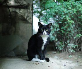 Stock Photo a black kitten